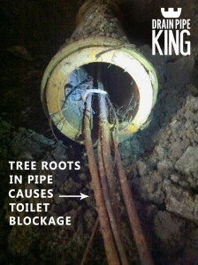 Tree roots can cause toilets to become blocked. They get in to the pipes thorugh aloose crack or joint and thrive on the nutrients in the moist pipes and ground.